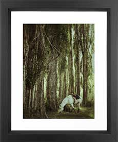 Buy photographs as art prints