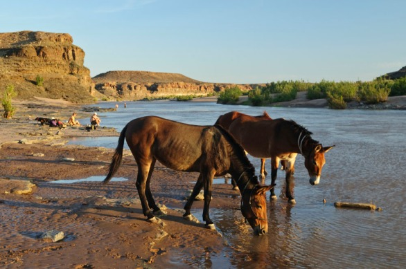 fish-river-canyon29